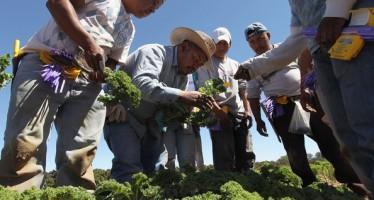 PREFIEREN LATINOAMERICANOS EN EUA SER DESCRITOS COMO MEXICANOS