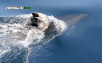 Funeral de un delfín bebé VIDEO