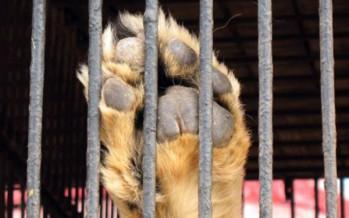 Se aprueba ley para brindar trato digno a los animales en cautiverio.