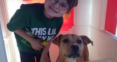 La bella historia de una perrita maltratada, y su rescatista, un niño autista. Video