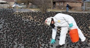 Mueren millones de mirlos, por cuarto año consecutivo, en la víspera de año nuevo en Arkansas.