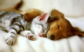 ALDF aprueba Ley para el registro obligatorio de perros y gatos