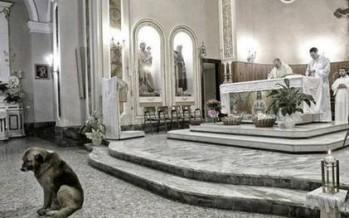 """La historia de """"Ciccio"""", el perro que asiste a misa todos los días."""