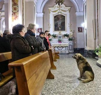 pastor-aleman-ciccio-iglesia-italia