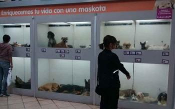Constatan maltrato en tiendas de mascotas del DF