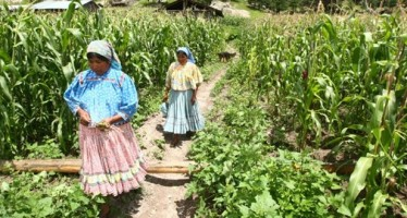 Soberanía y seguridad alimentaria, principales peticiones de mujeres rurales de AL