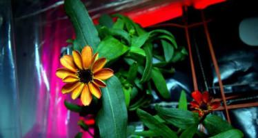 Nace la primera flor en el espacio