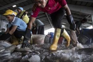 Pesca de camarón hecha por menores de edad