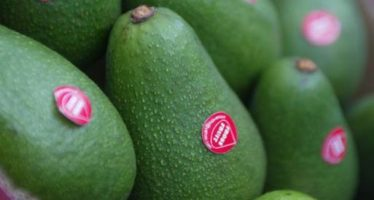 Productores se preparan ante nuevos requisitos para exportar agroalimentos a EU