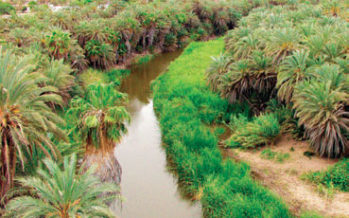 Pese a solicitud, no se ha declarado área protegida oasis de sierras La Giganta y Guadalupe