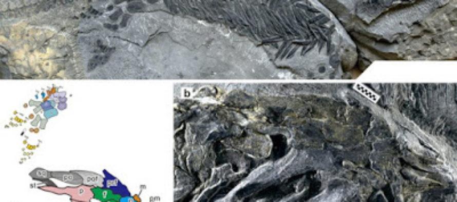 """Hallan reptil """"aberrante"""" que respalda la teoría de la evolución de las especies"""