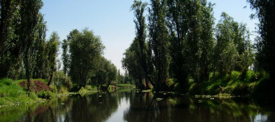 Piden al gobierno de la CDMX informe sobre tala de 300 árboles en Xochimilco