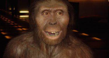 Los simios asiáticos, más parecidos a los humanos, se extinguieron por el frío
