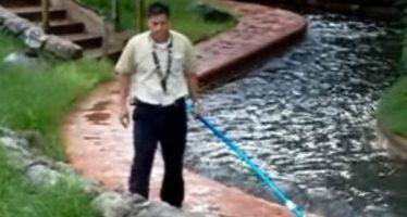 Video muestra a empleado de Disney ahuyentando a caimán que está en una atracción