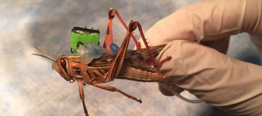 Marina de EU apoya investigación para crear insectos detectores de explosivos