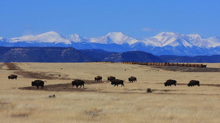 El rancho King Ranch, el más grande de Texas