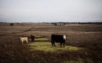 Los más grandes terratenientes de EU, los verdaderos dueños del país