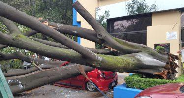 Árbol cae sobre vehículos en la Anzures