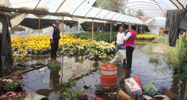 Apoyarán a floricultores de Xochimilco afectados por las lluvias
