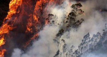 Alarma por más de 100 mil muertes asociadas a incendios en Indonesia