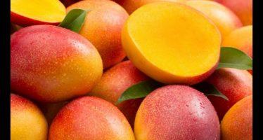 Comer mango puede evitar la diabetes y la obesidad… en ratones