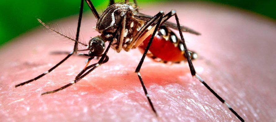 Hay 5 mil 204 contagios de zika en México en lo que va del año, dice Salud