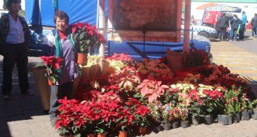 Floricultores de Xochimilco denuncian venta de Nochebuenas chinas, malas y descoloridas
