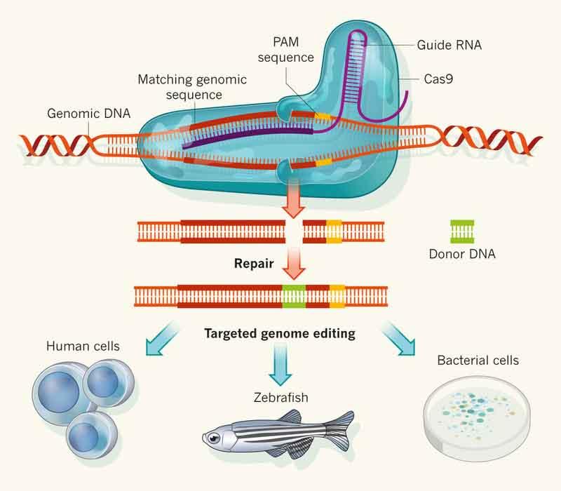 Batalla legal por procedimiento de edición del genoma