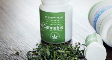 Senadores aprueban el uso medicinal de la mariguana; pasan minuta a diputados