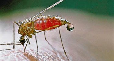 Insecticida en fase de prueba puede hacer reventar a los mosquitos