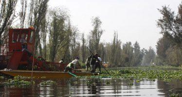 Autoridades de Xochimilco limpian canales para preservar la zona y especies