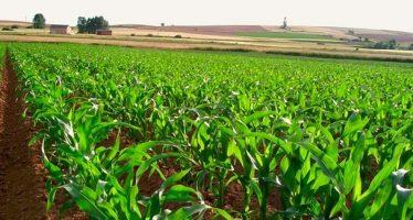 Sagarpa informó superávit de la balanza comercial agropecuaria; se triplicó en 2016