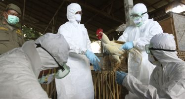 En alerta la OMS por rápida propagación de gripe aviar en el mundo