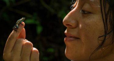 Descubren nueva especie de rana venenosa en la Amazonia peruana