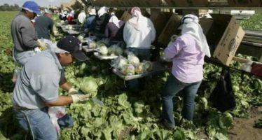 México debe aprovechar conocimiento y mano de obra de migrantes agrícolas, dice académico