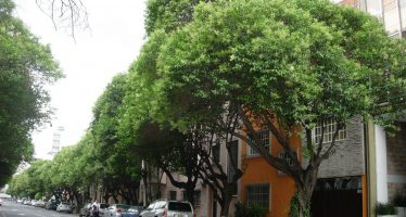 Advierten sobre peligro de plantas exóticas invasoras introducidas al país