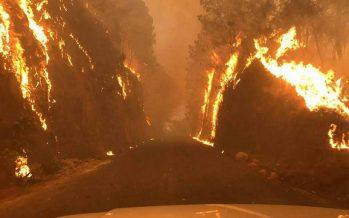 Incendio forestal se extiende en Ocuilan, zona entre Morelos y Estado de México