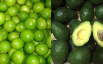 Llaman autoridades a no especular con el precio del limón y el aguacate