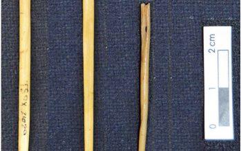 Hallan en Xochimilco agujas hechas con huesos humanos, creadas por habitantes prehispánicos