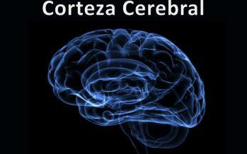 Ligan mayor tamaño de corteza cerebral a mejor memoria de algunos ancianos