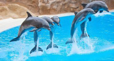 Sin plena discusión en foros, el PVEM impulsa acabar con delfinarios