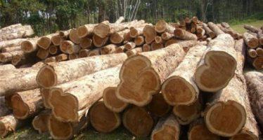 Administración de EU impondrá arancel compensatorio a madera de Canadá