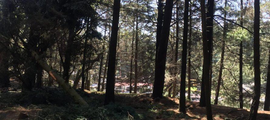 Se salvan, por el momento, 3 mil árboles del Ocotal
