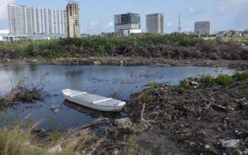 Tribunal ampara a grupos ambientalistas que protegen manglar de Tajamar