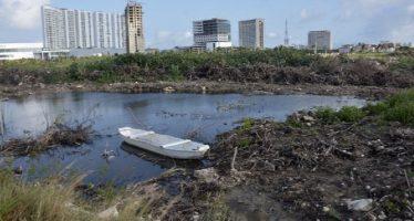 Tribunal ampara a ambientalistas que protegen manglar de Tajamar