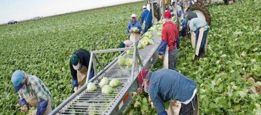 Cinco estados agrícolas de EU serían aliados de México al renegociar el TLCAN: Senado