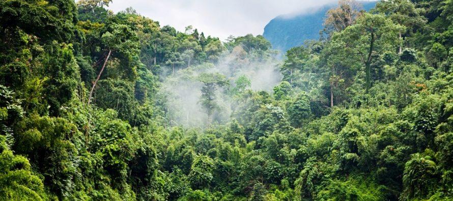 Vegetación puede cambiar el clima hasta en un 30 por ciento