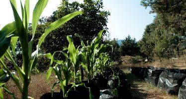 "UNAM crea programa ""La milpa sustentable"""