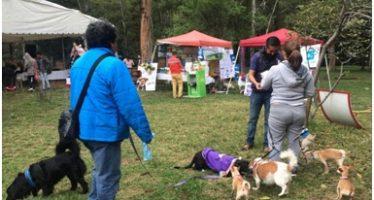 """En Xochimilco atenderás a tu perro o gato en """"Vive Mascota"""""""