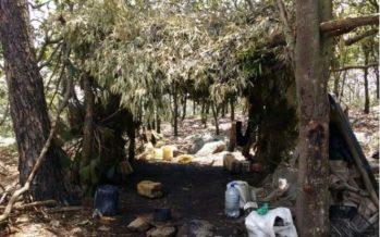 Aseguran campo de entrenamiento de sicarios en Jalisco